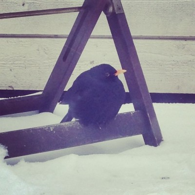 I think this bird is cold... ❄️ #fmsphotoaday Day 15: Black + White #winter #bird #cold
