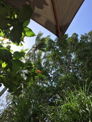 Jeg ligger aldri og soler meg - det tåler jeg ikke. Men å ligge under en parasoll og titte opp på grønt og blomster mens fuglene kvitrer og det suser i palmebladene er jo en form for terapi i seg selv! :-D Grønn terapi!